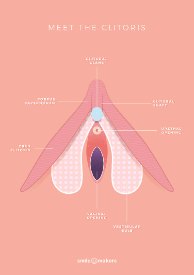 SmileMakers-Female-anatomy-poster-Meet-the-clitoris-724x1024