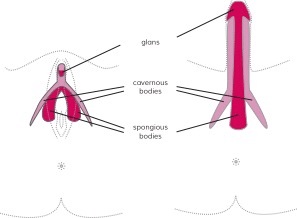 Clitoral Or Vaginal Orgasm: Is There Really A Difference?